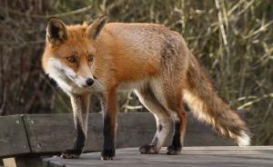 fox.banner.flickr